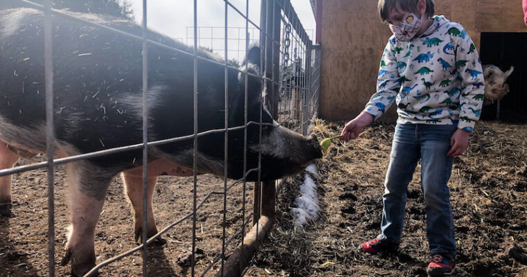 """Episode 28 – NM Farm Sanctuary 